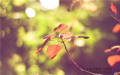 绿秋枣树(3)